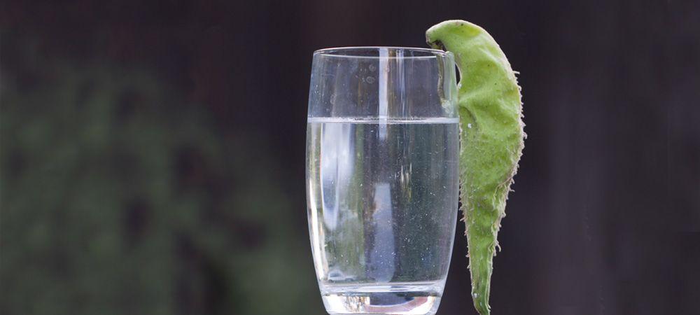 glas-seidenpflanze
