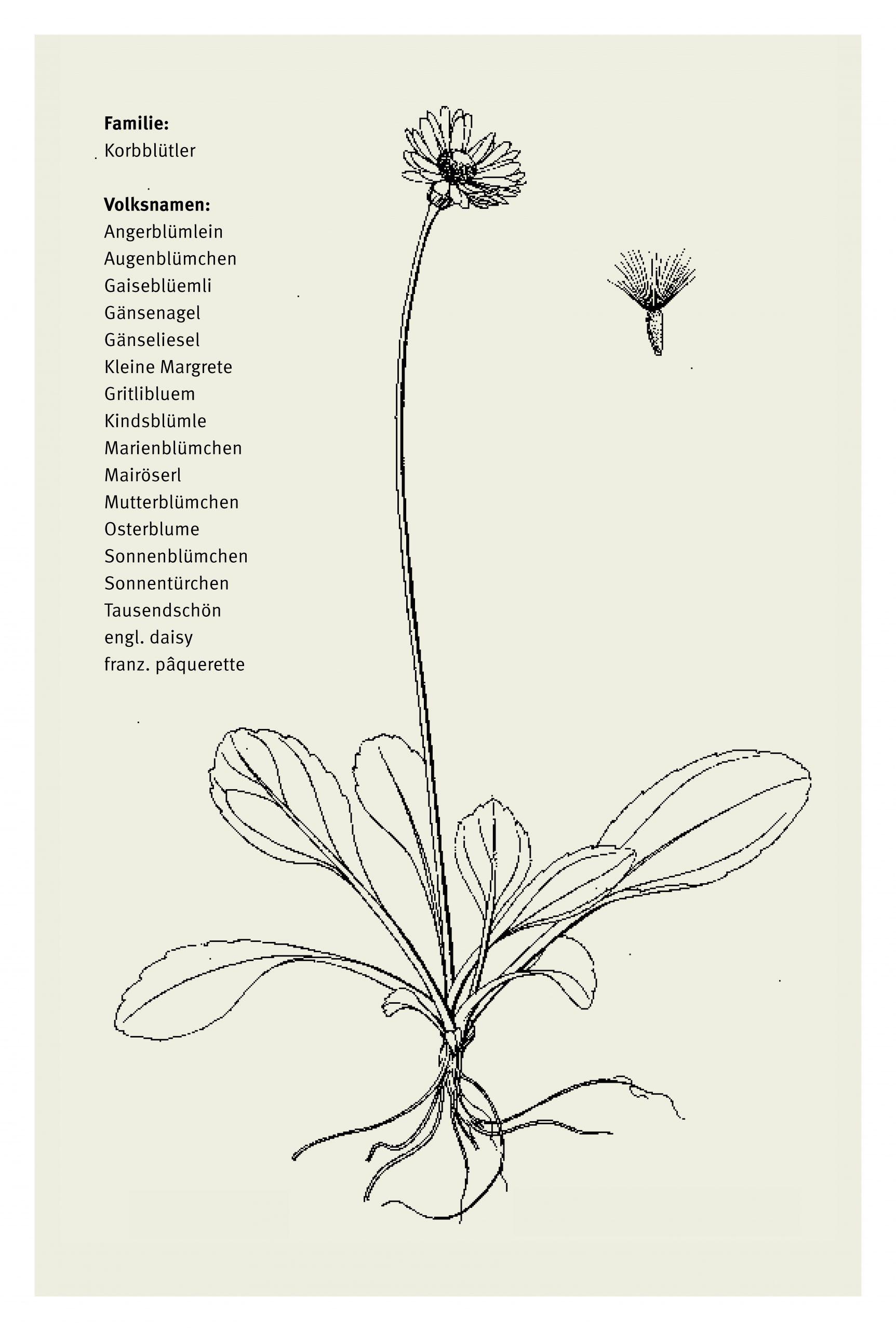 Heilkräuter_und_Zauberpflanzen_Look_Inside_Seite_10