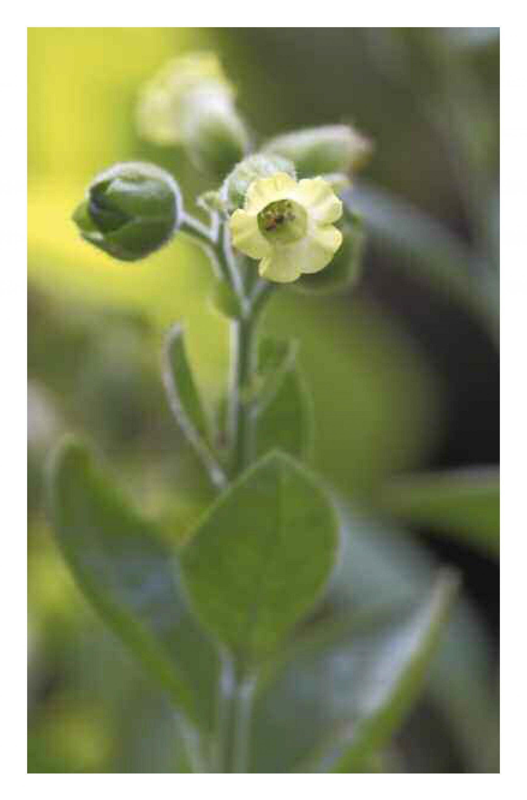 Leseprobe Wandernde Pflanzen_Seite_11