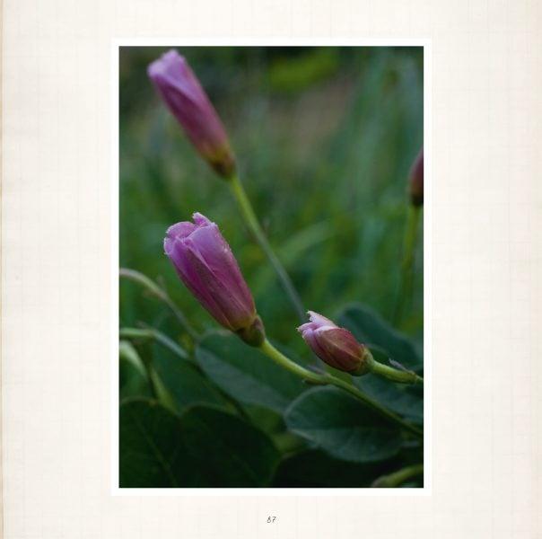 Seele der Pflanzen Leseprobe_Seite_08
