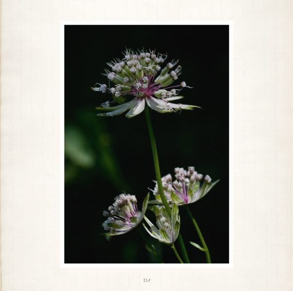 Seele der Pflanzen Leseprobe_Seite_10