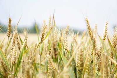 Getreide