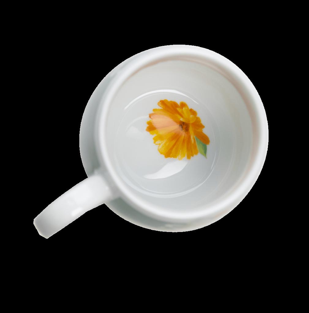 Teetassenboden-blume
