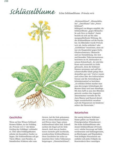 Alles über Heilpflanzen_01